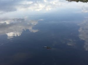 Alligator swimming in clouds